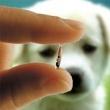 Újbuda Önkormányzata Állatorvosi Rendelő és Hivatal