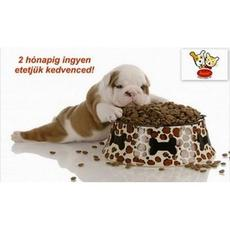 Husse: Állati jó ajánlat - 2 hónap ingyen táp