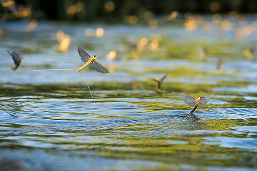 Ilyen, mikor a Tisza felett repülnek, fotó: femina
